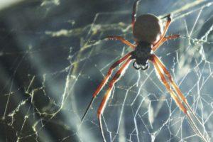 La araña: simbología de un animal temido y poderoso