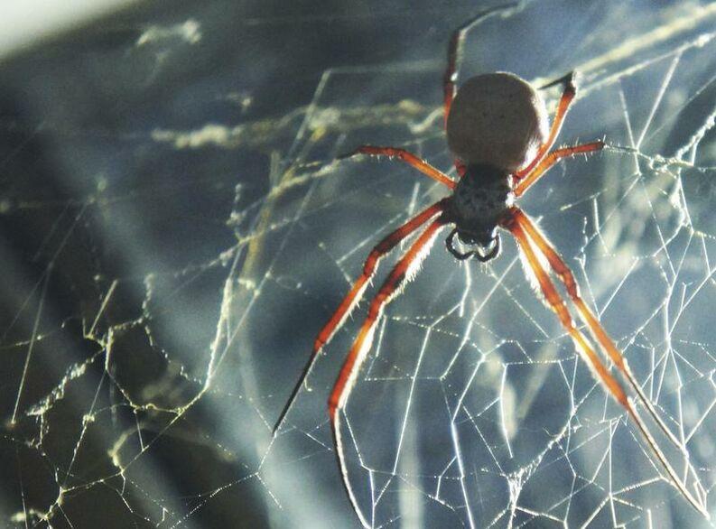 simbologia esotérica de la araña