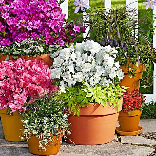 flores azaleas beneficios