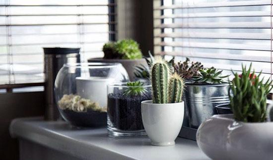 cactus - plantas de interior