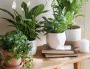 Plantas de interior indispensables en tu hogar