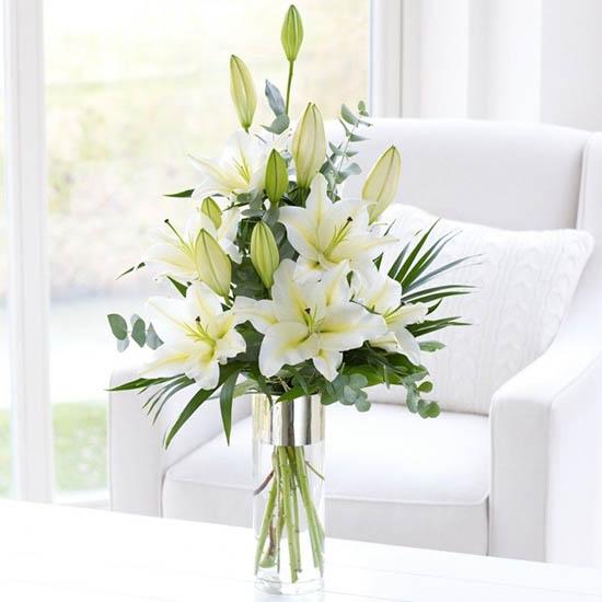 lirios florero propiedades